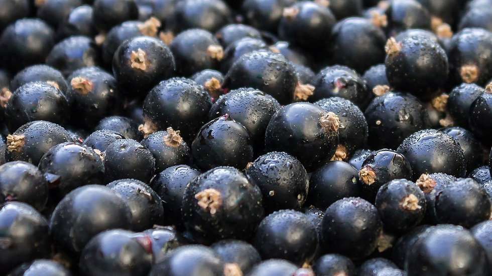 Blackcurrants (1kg)