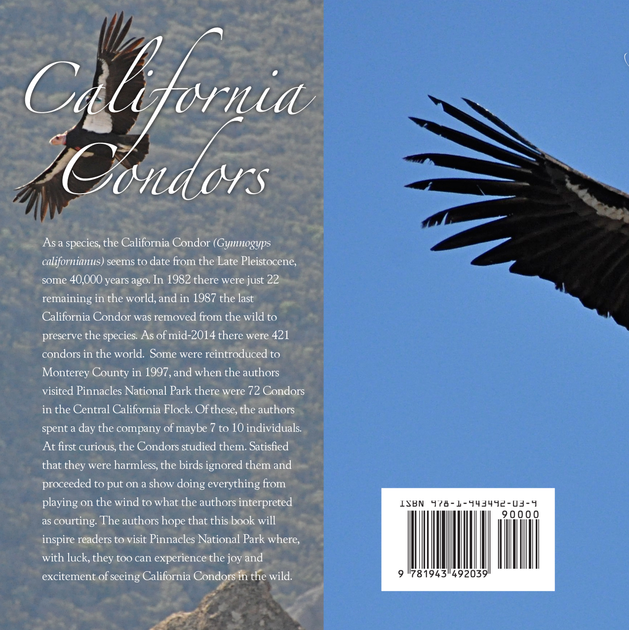 Condor-back.cover.jpg
