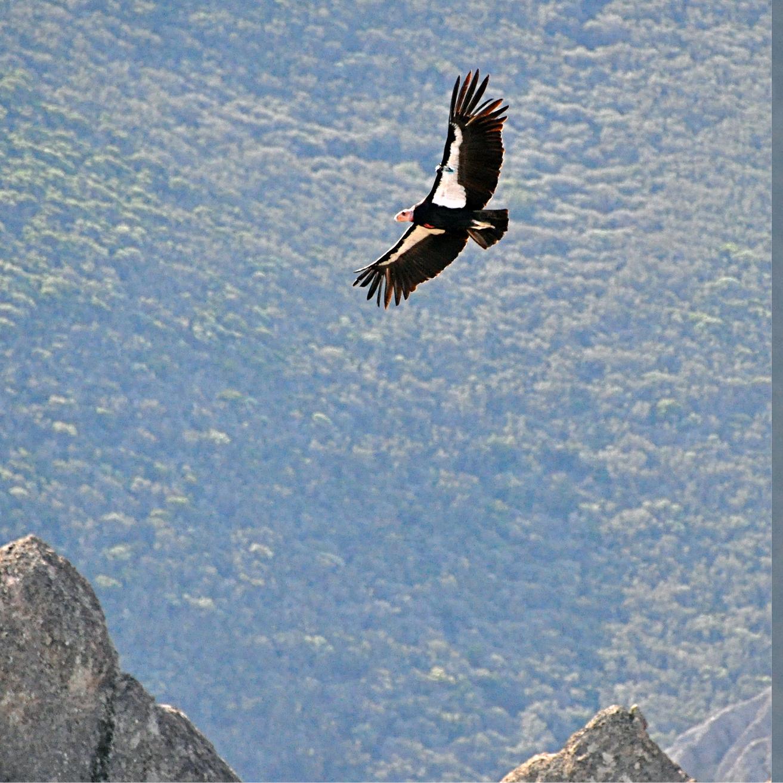 Condors24.jpg