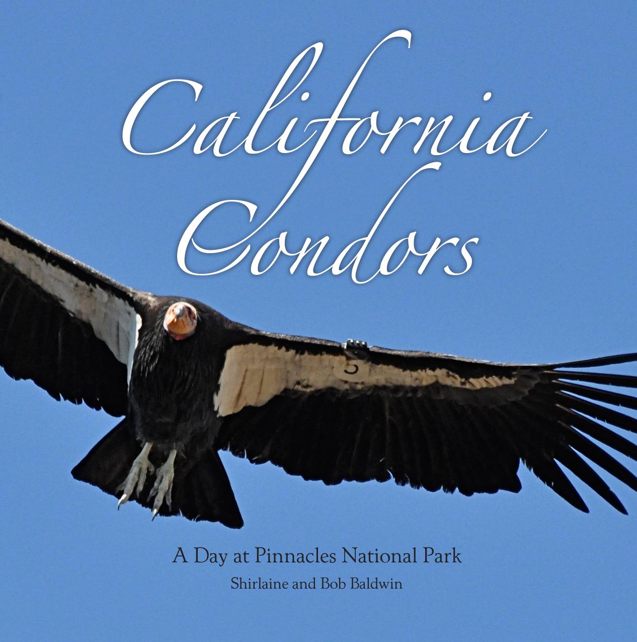 Condor-cover.jpg
