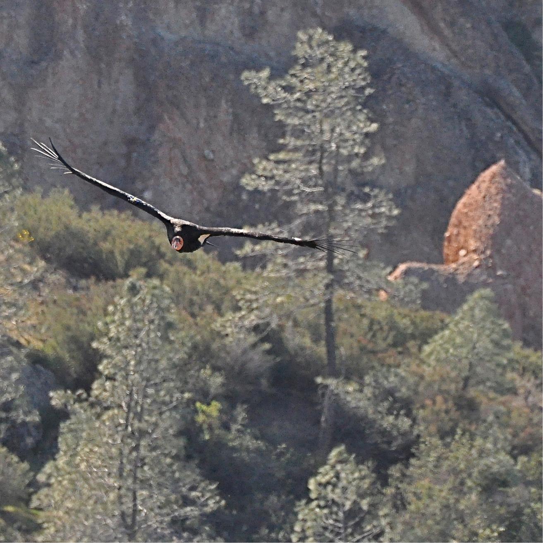 Condors9.jpg