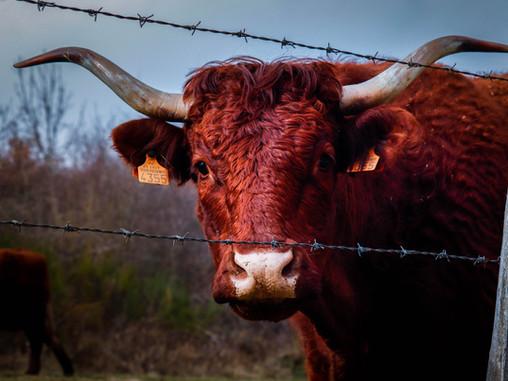 Documentales que te animarán a dejar de comer carne
