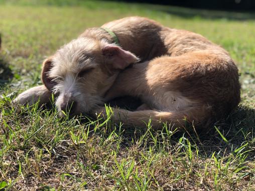 Albus, una adopción que le devolvió las ganas de vivir