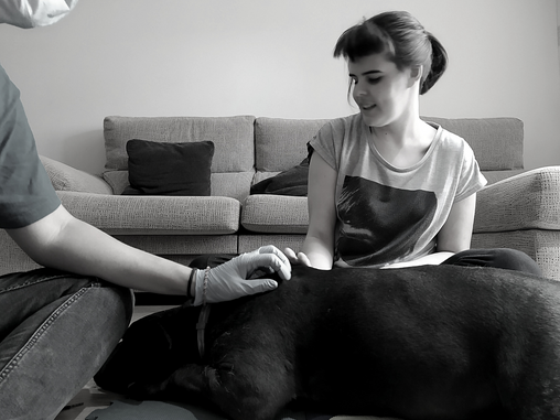 Medidas para hacer frente al COVID-19 en sesiones de terapia asistida con perros y educación canina