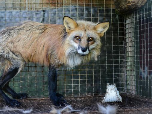 Explotación animal: Ropa