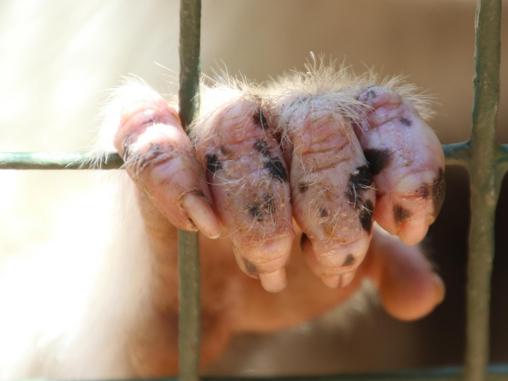 Cómo denunciar maltrato animal