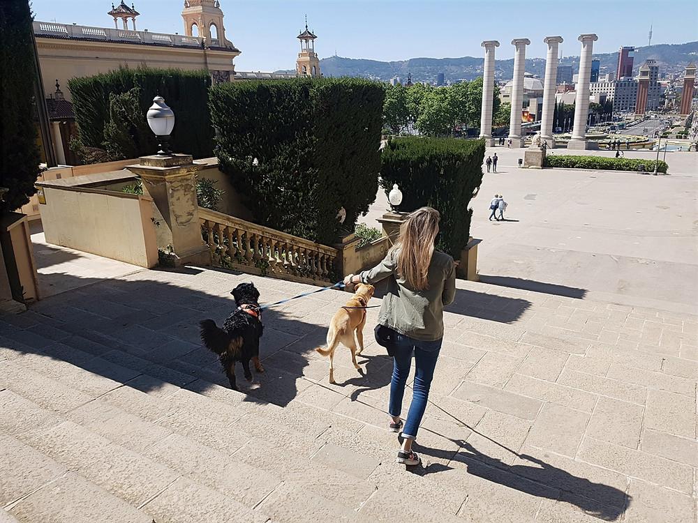 Educación Canina en Positivo