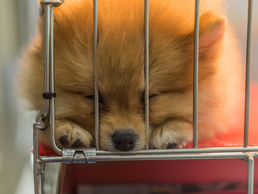 Explotación animal: Comercio con Animales