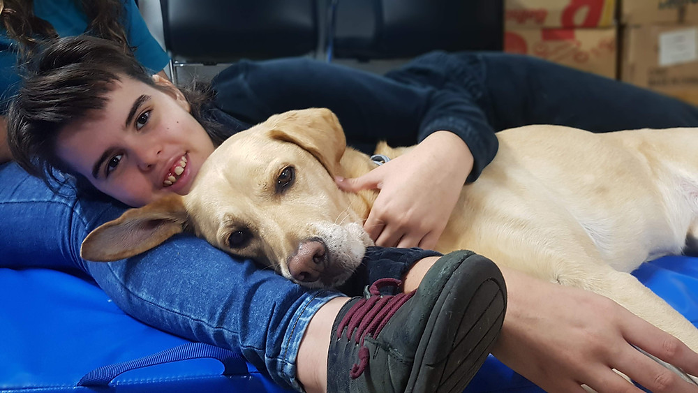 intervencion asistida con perros