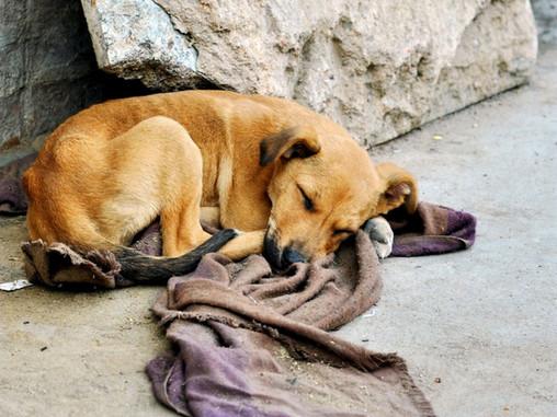 ¿Qué hacer si te encuentras a un perro perdido o abandonado?