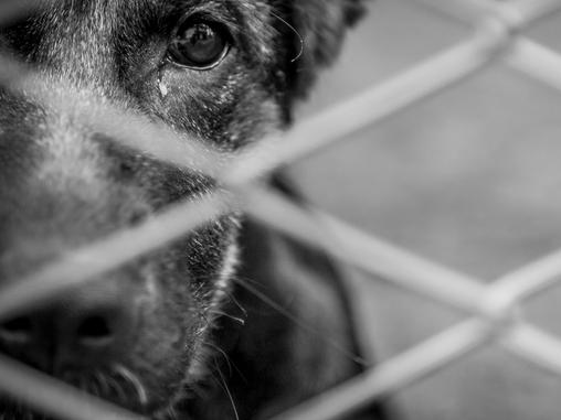 ¿Qué pasa cuando se abandona a un animal? Consecuencias directas del  abandono