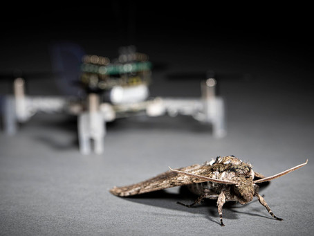 Smellicopter: 蛾の触覚を使用して匂いの元を辿る小型ドローンを科学者らが開発[ビデオ有]