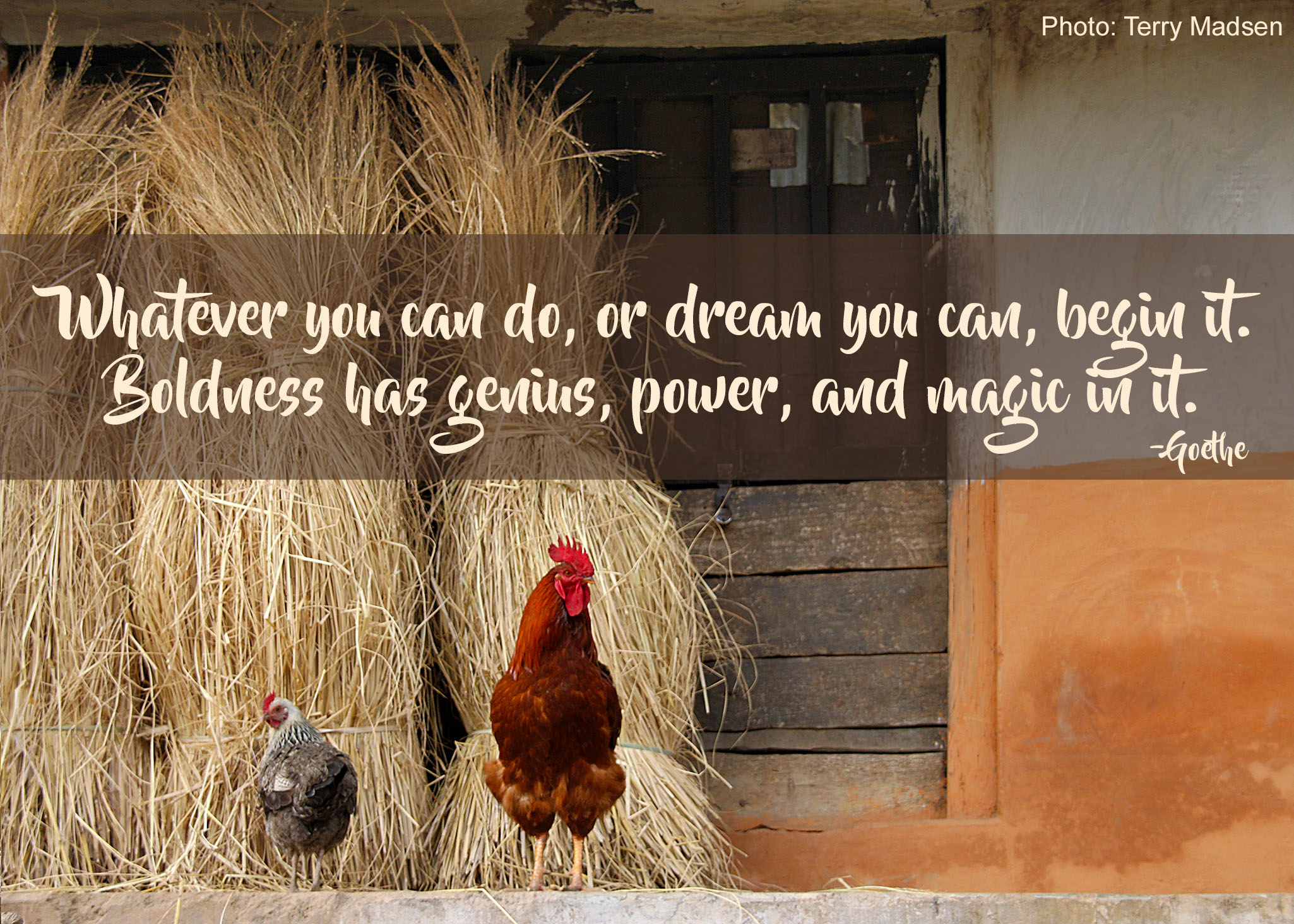 Help build a chicken farming co-op