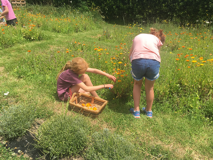 Children collecting calundula flowers in a field, using a beautiful wooden basket.
