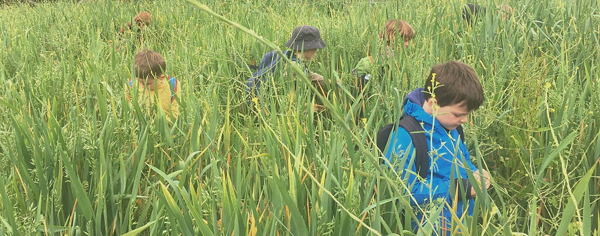 Five year old children are searching for peas in a field (as heigh as they stand) with peas and grass.