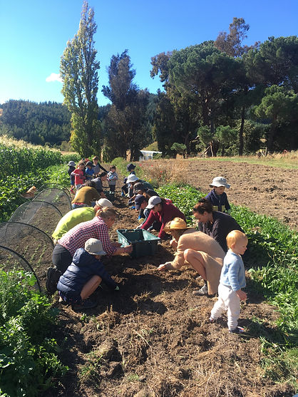 A community of families gardening together and giving back to the land that feeds us.