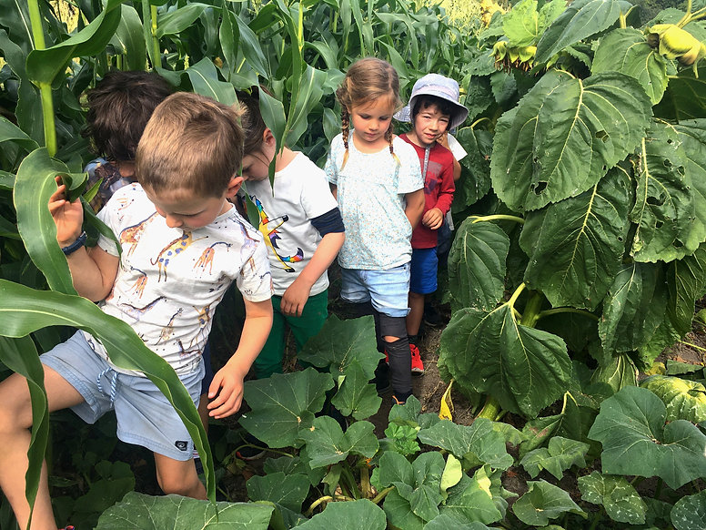 Children walking through a jungle of corn and sunflowers.