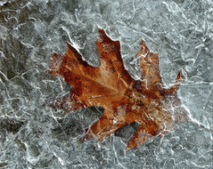 Artistry in Ice
