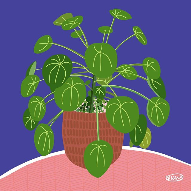 "Titled ""Plethora of Pilea"" A4 300gsm Sat"