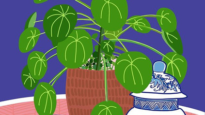 """Titled """"Pilea Dream"""" A4 Limited Edition"""