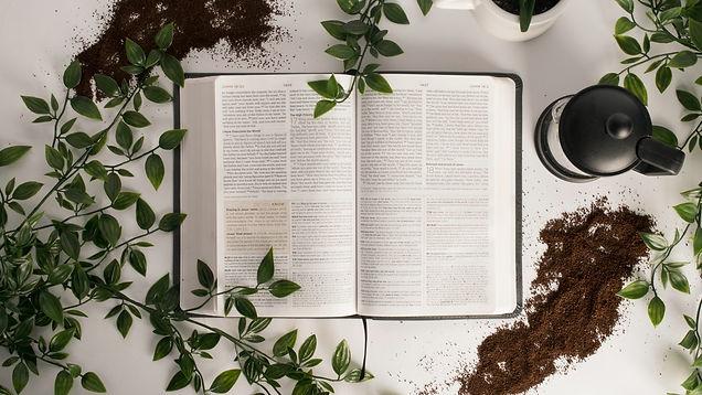proyectobiblia.jpg