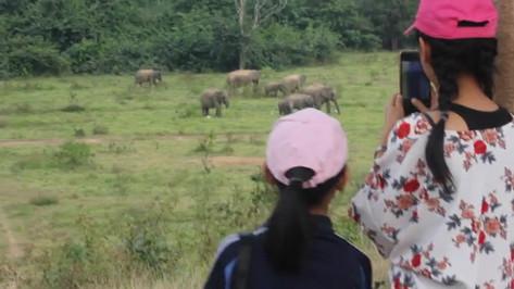 elephants kui buir.mp4
