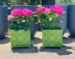 green planters