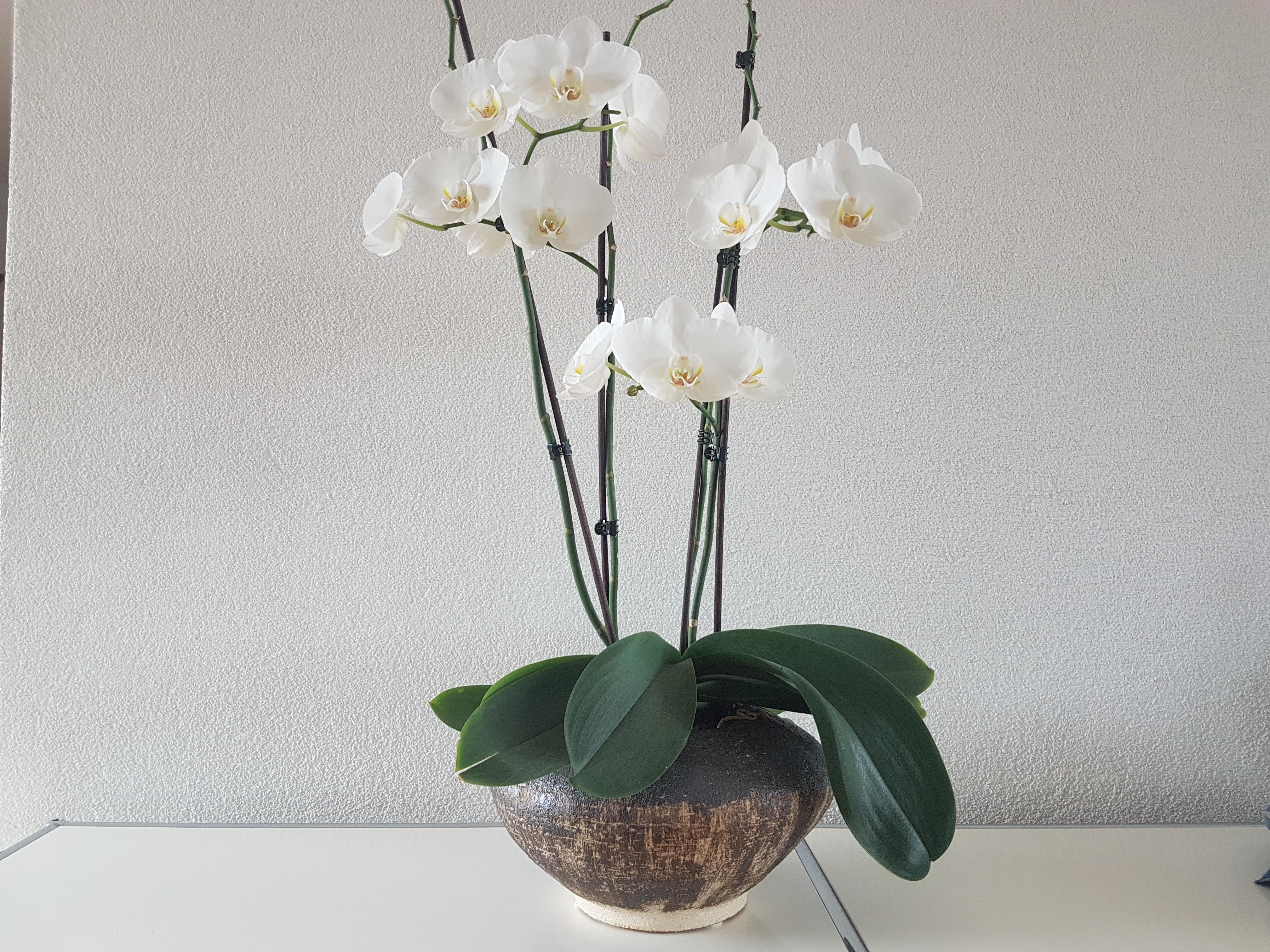 Gefäss für Orchideen, Braunstein