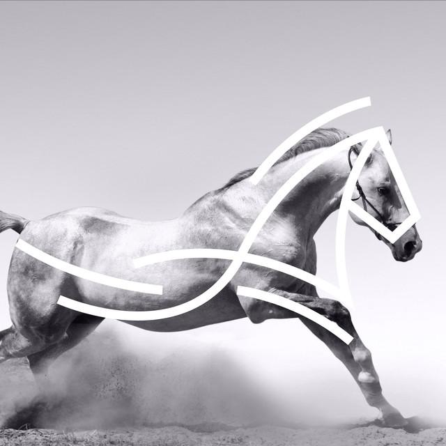 ِEquestrian Branding