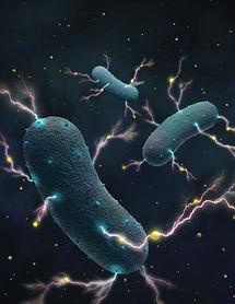 3 bacteria.jpg