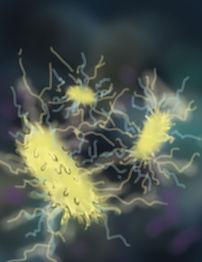 electric bacteria_001.jpg