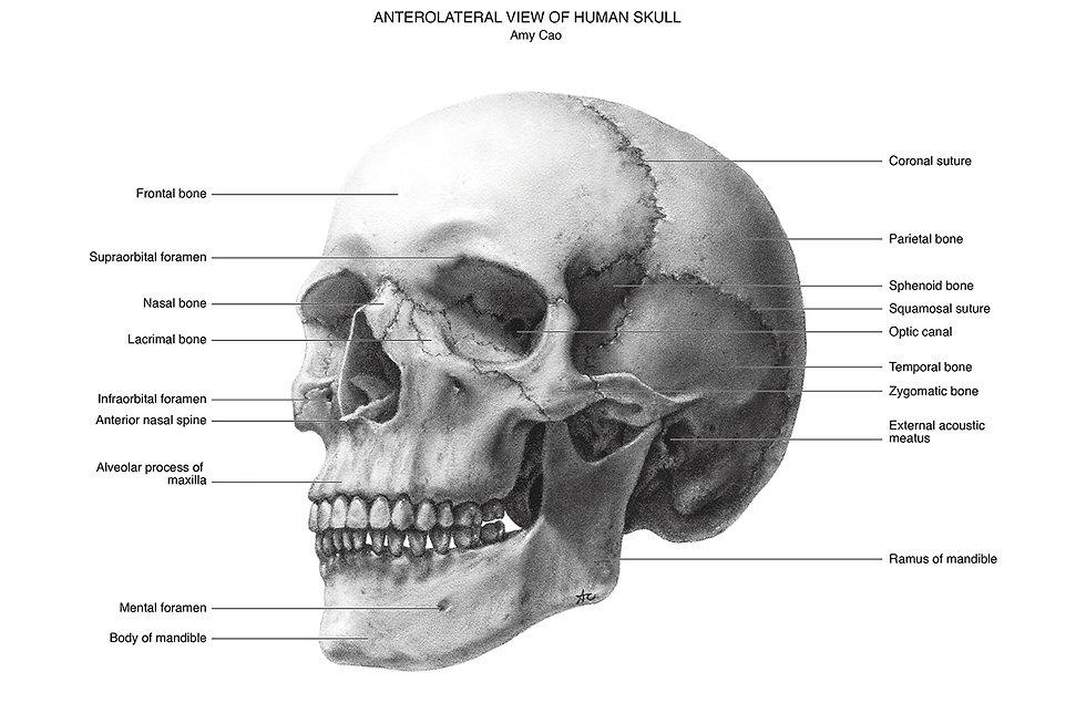 Cao-Amy-skull-carbon dust.jpg