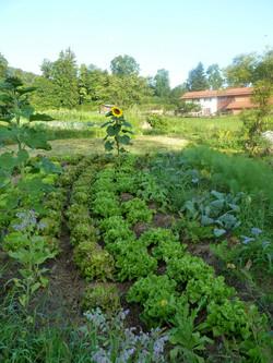 Salat-Garten