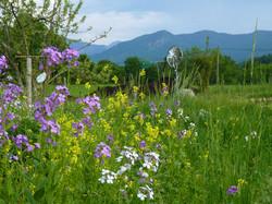 Blumenwiese-Mai