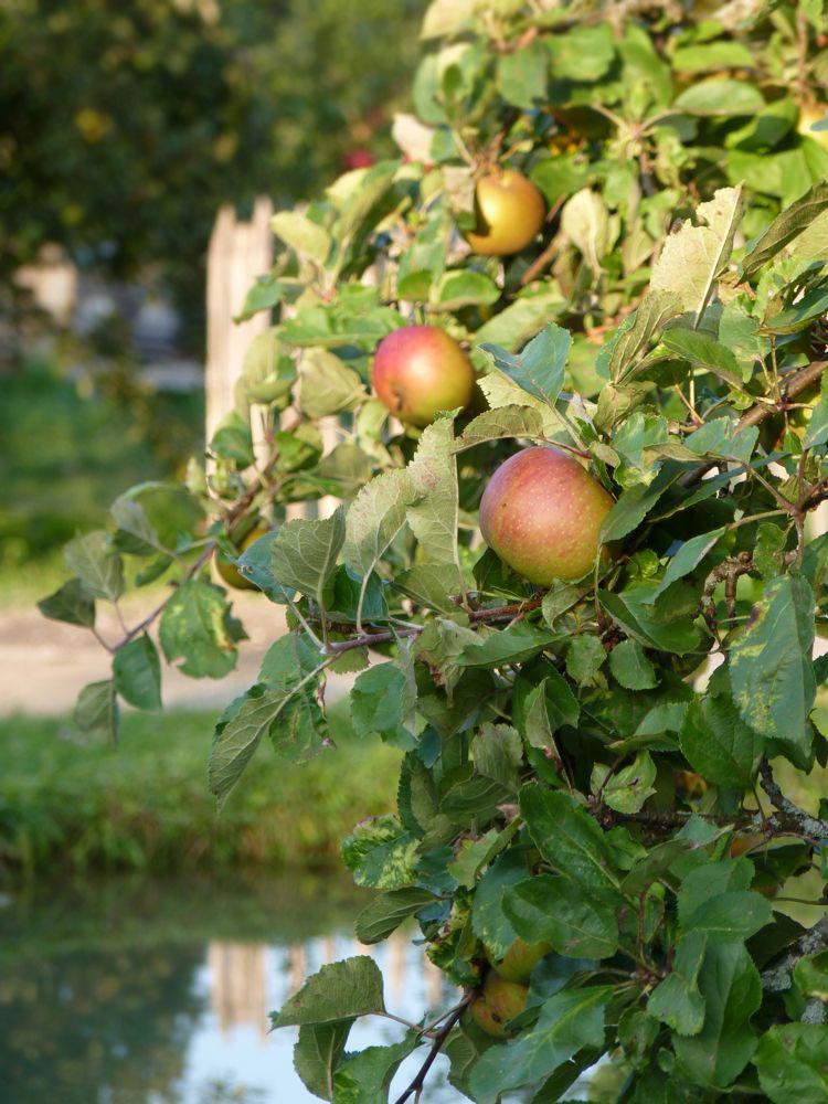 Apfel-hoch