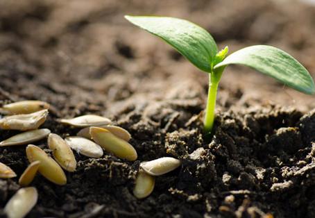 Ab sofort wieder samenfestes Saatgut für Gemüse und Blumen in unserem Hofladen