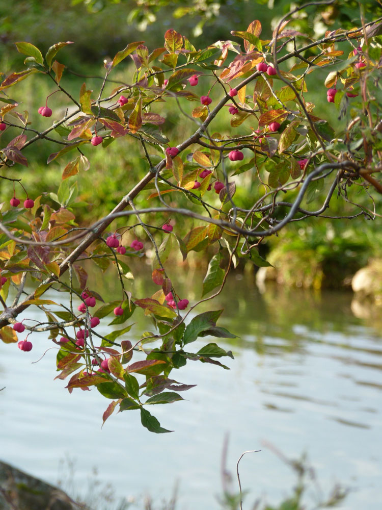 Pfaffenhuetchen-Herbst
