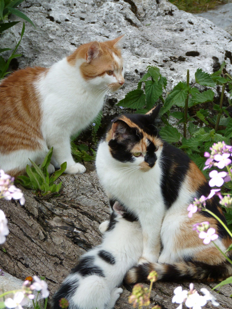 Katzen-im-Garten