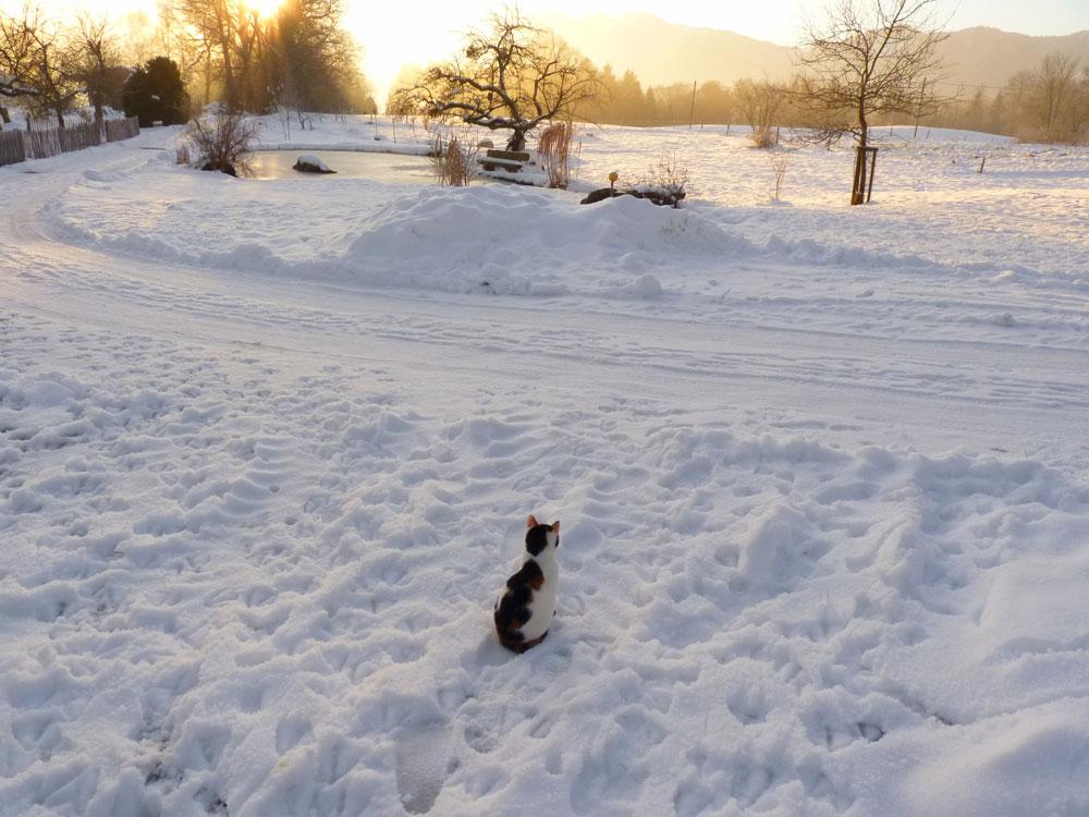 Winter-mit-Katze