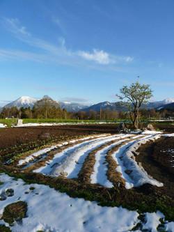 Gemuesegarten-Winter