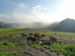 Scheine-im-Nebel
