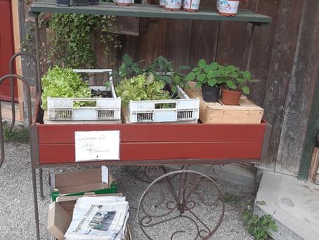 Jungpflanzen, Kräuter, Saatgut (alles bio und samenecht)