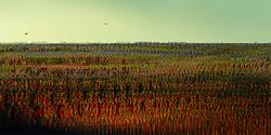 Breaking Dawn, 2013, 30 x 60 cm, Ed. of 5, Digital painting