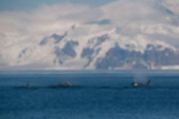 Sail t Antarctica