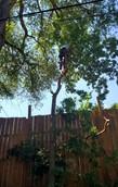 dad climbing.jpg