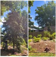 tree removall.jpg