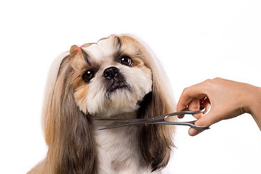 dog-grooming-scissors.jpg