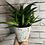 Thumbnail: Black & White Speckled Pot