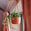 Thumbnail: Terracotta Hanging Planter