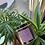 Thumbnail: Gold Tin - 250ml